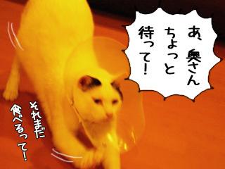 Shirokuro0902_2