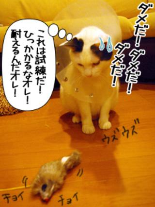 Shirokuro0902_5