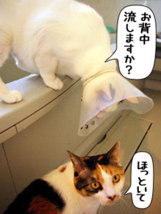 Shirokuro0903_4