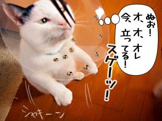 Shirokuro0903_5