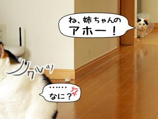 Shirokuro0903_6