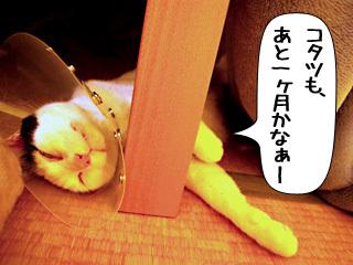 Shirokuro0903_8