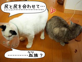 Shirokuro0903_9