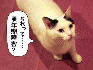 Shirokuro0904_6