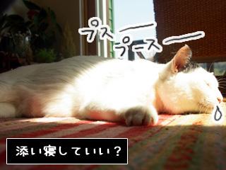 Shirokuro0904_9