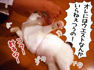 Shirokuro0906_6