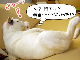 Shirokuro0906_8