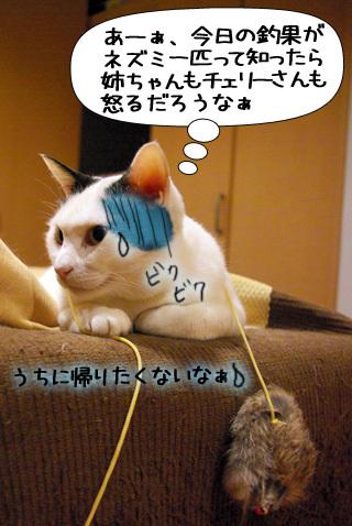 Shirokuro0908_1