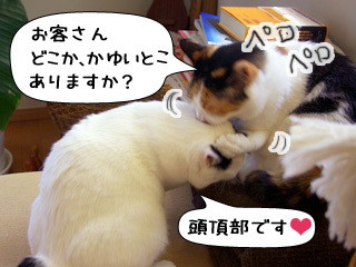 Shirokuro0908_10