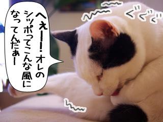 Shirokuro0908_8