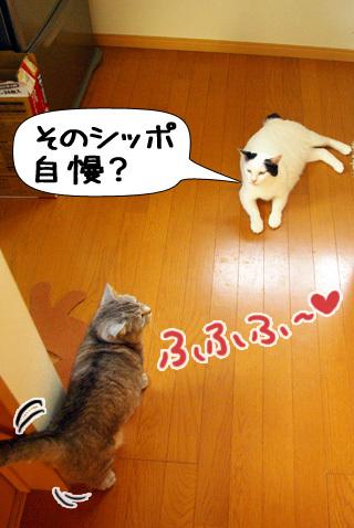 Shirokuro0909_10