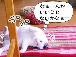 Shirokuro0909_5