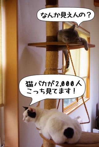 Shirokuro0910_9