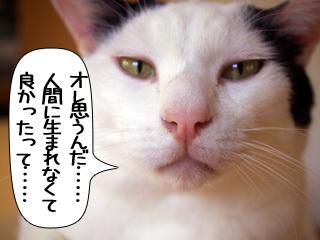 Shirokuro0911_4