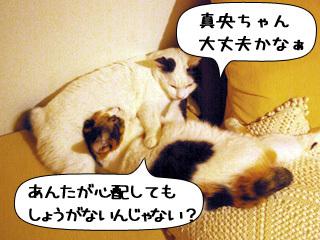 Shirokuro0911_6