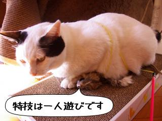 Shirokuro0911_7