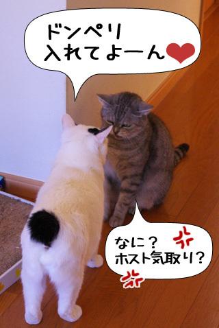 Shirokuro0911_8