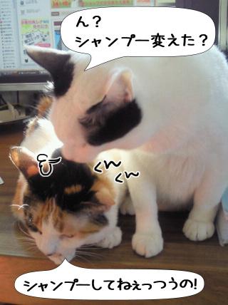 Shirokuro0912_1