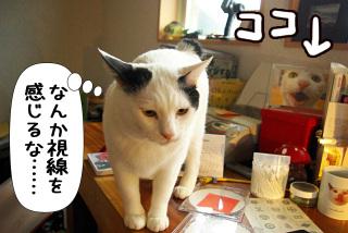 Shirokuro0912_9
