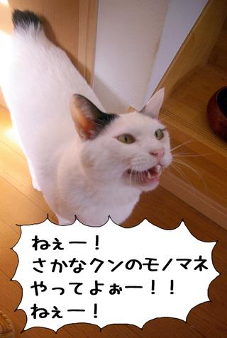 Shirokuro1003_3