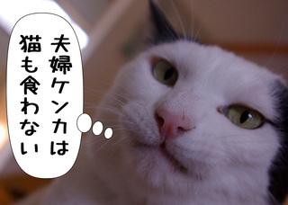 Shirokuro1003_5
