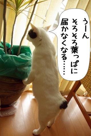 Shirokuro1003_6