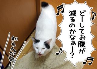 Shirokuro1004_6