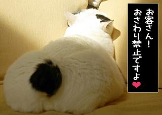 Shirokuro1006_10