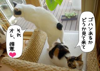 Shirokuro1008_5
