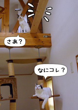 Shirokuro1009_4