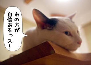 Shirokuro1009_5