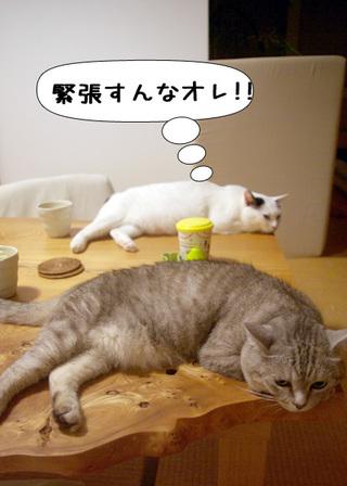 Shirokuro1009_6