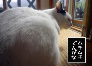 Shirokuro1011_1