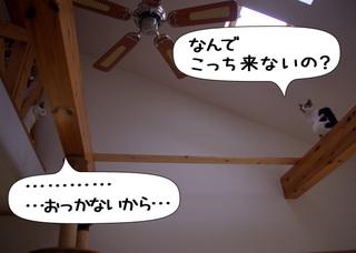 Shirokuro1012_6