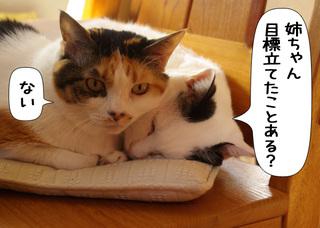Shirokuro1101_12