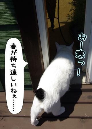 Shirokuro1102_2
