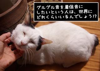 Shirokuro1102_6