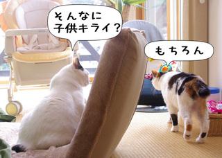 Shirokuro1102_8
