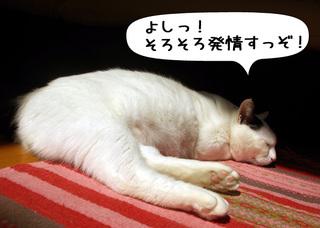 Shirokuro1102_9