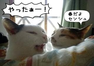 Shirokuro1103_1