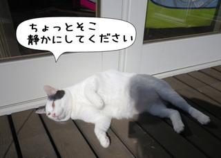 Shirokuro1103_4
