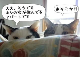 Shirokuro1103_8