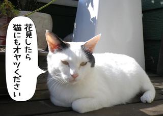 Shirokuro1103_9
