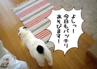 Shirokuro1105_1_2