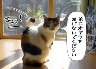 Shirokuro1105_2