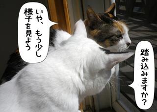 Shirokuro1105_3