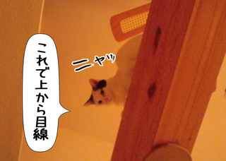 Shirokuro1105_5