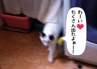 Shirokuro1105_8