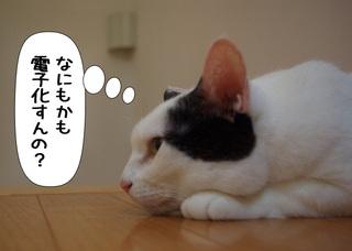 Shirokuro1106_2