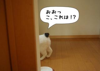 Shirokuro1107_1